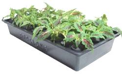 Gro Clone Hydroponic Garden Plants Cloner