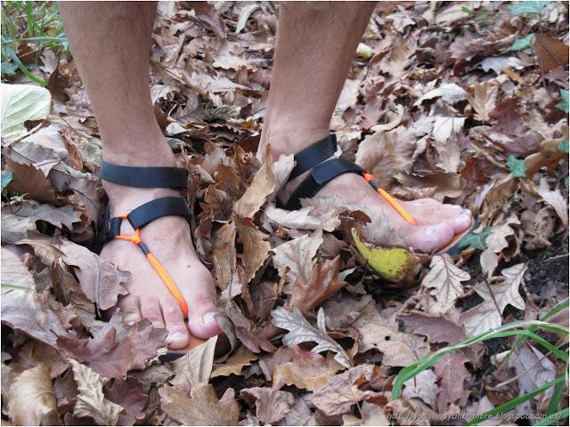 alfombra de hojas, sobre todo roble