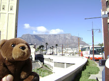 Teddy Bear in Capetown