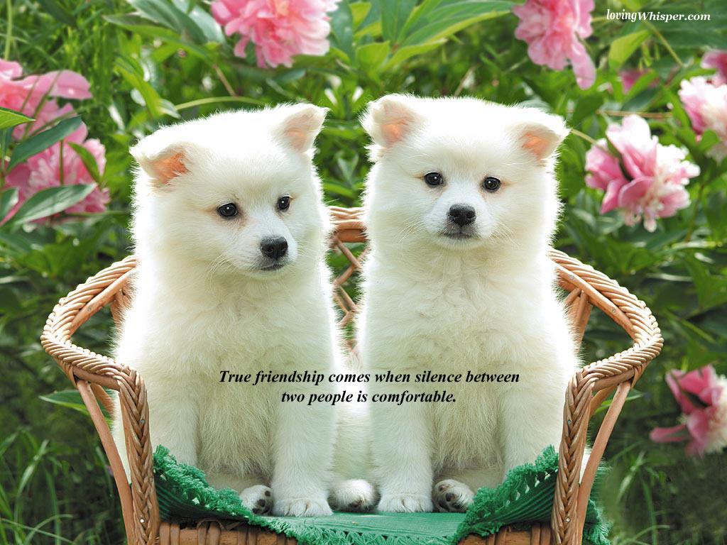 http://4.bp.blogspot.com/-iA4rW4OaTd0/UBAtTgUg4VI/AAAAAAAAEYY/EBvRsVYuGcM/s1600/friendship+(4).jpg