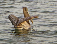 icw wildlife at cruiser's anchorage