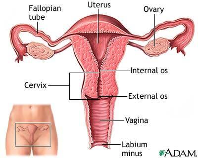 Blue print of a vagina