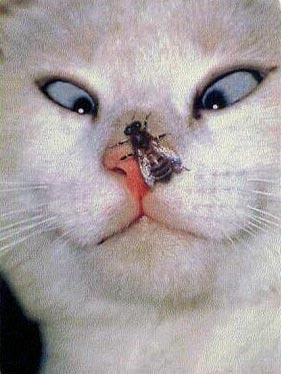 2Leep Onlie: funny cats
