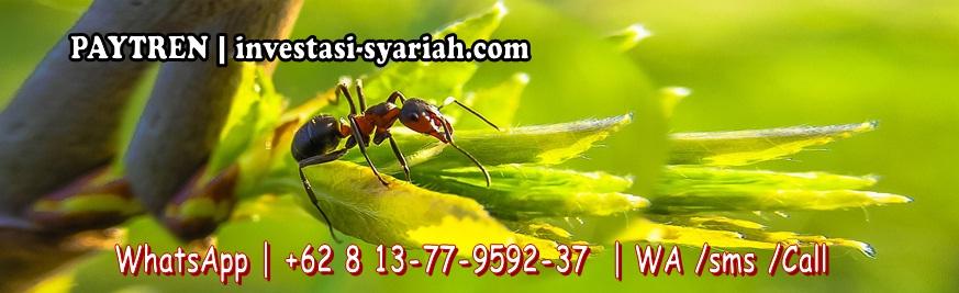 O813•77•9592•37 | PAYTREN ✓ Veritra Sentosa Internasional  pt ✓ PayTren Jogja Yogyakarta