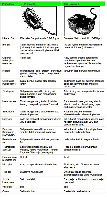 Pengertian, Perbedaan Sel Prokariotik & Sel Eukariotik