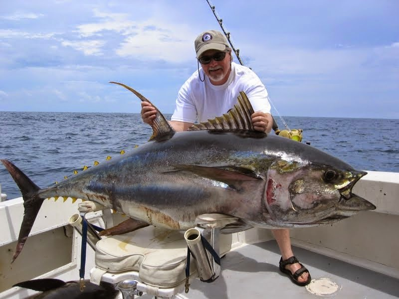 giant tuna fish