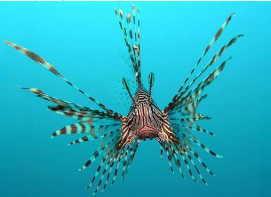 Amazing sea creatures clickandseeworld is all about funny for Amazing ocean images