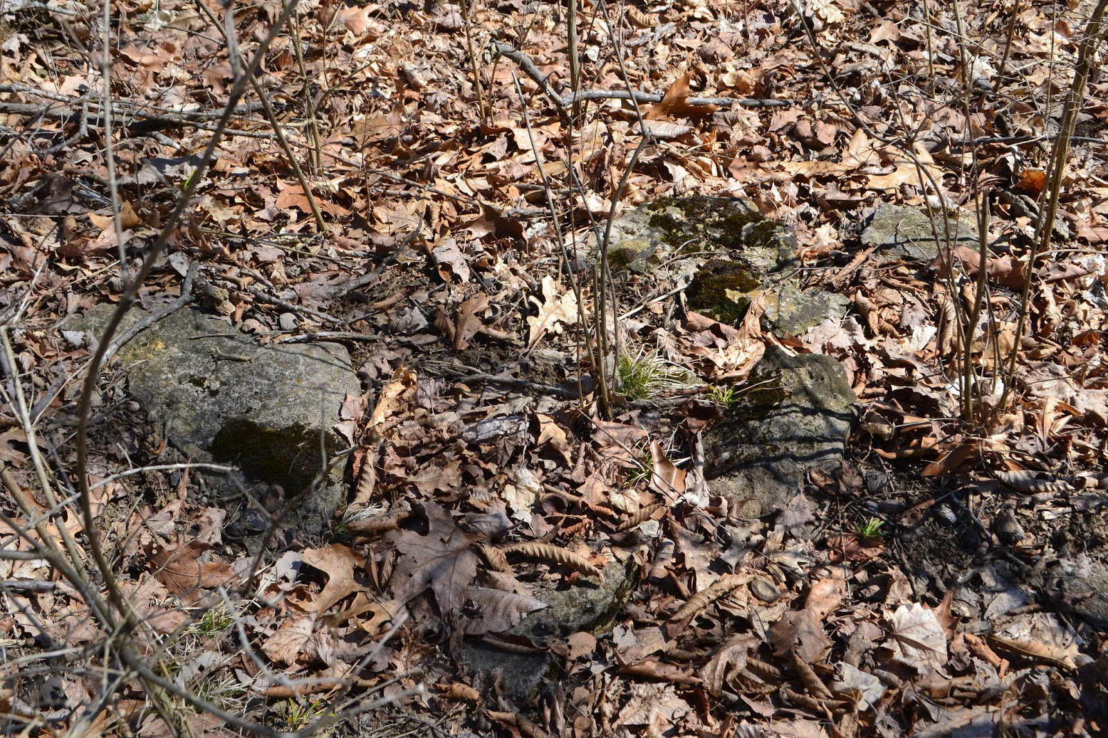 Nature in humanity 5 major forest soil relationships of for Where do we find soil