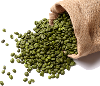 Hendel exitox green coffee bean singapore