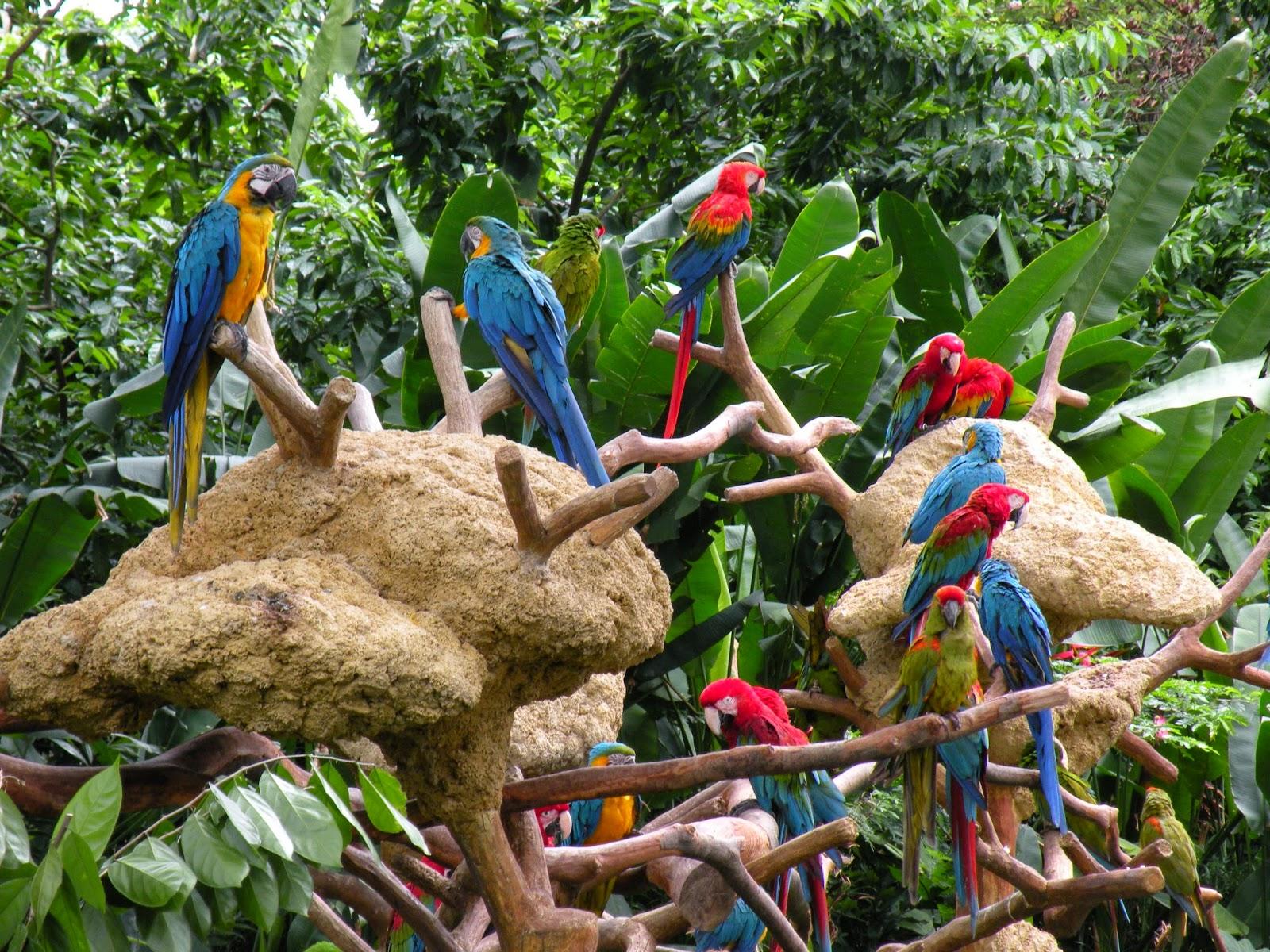 Wildlife in Singapore