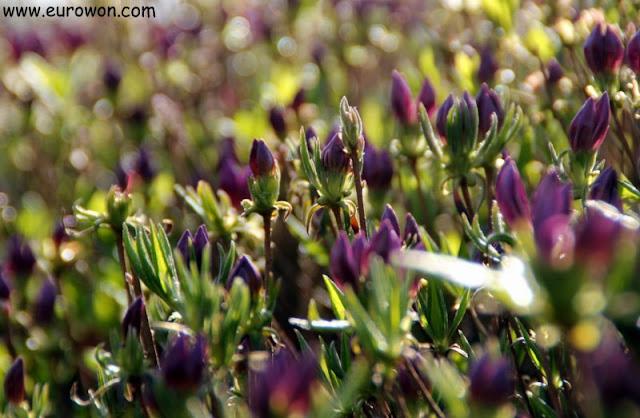 Flores moradas en Seúl