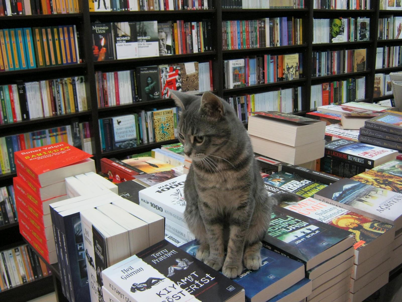 Культурный кот среди книг