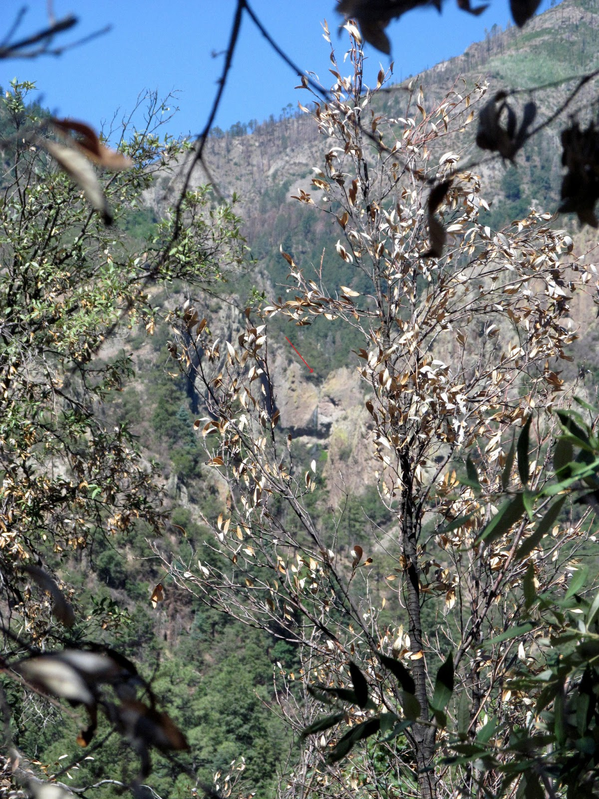 chiricahua mountains waterfall