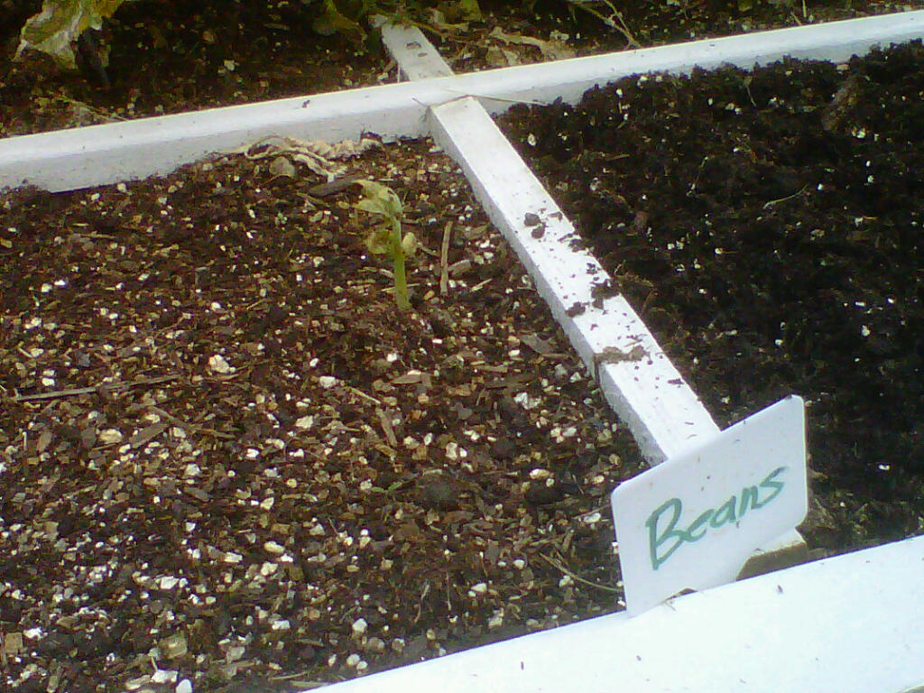 Square Foot Gardening in Alberta