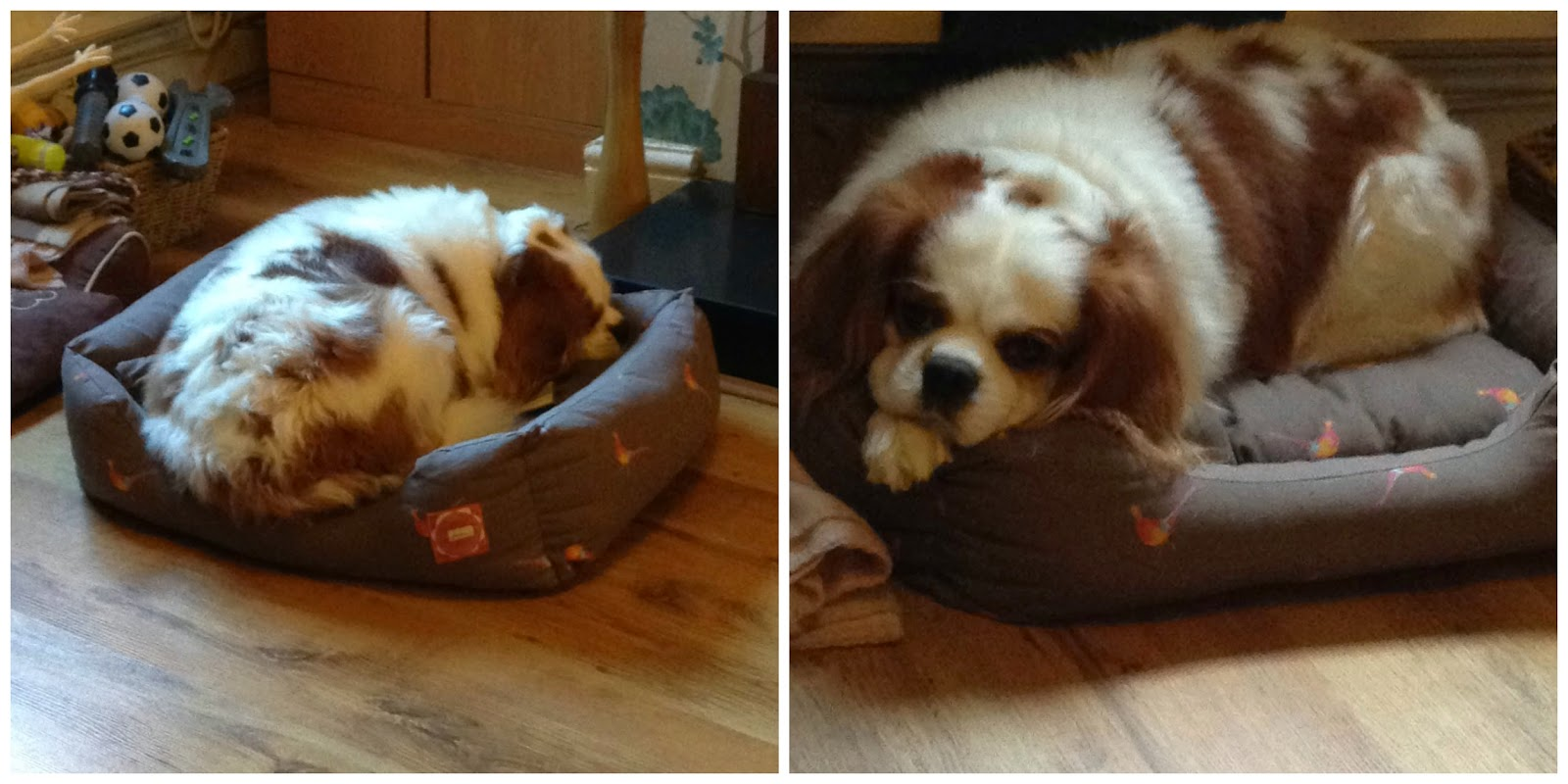Joules Pheasant Dog Bed