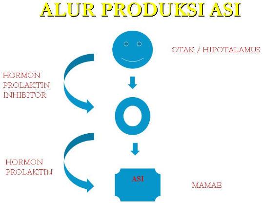 Artikel Kesehatan Produksi Asi