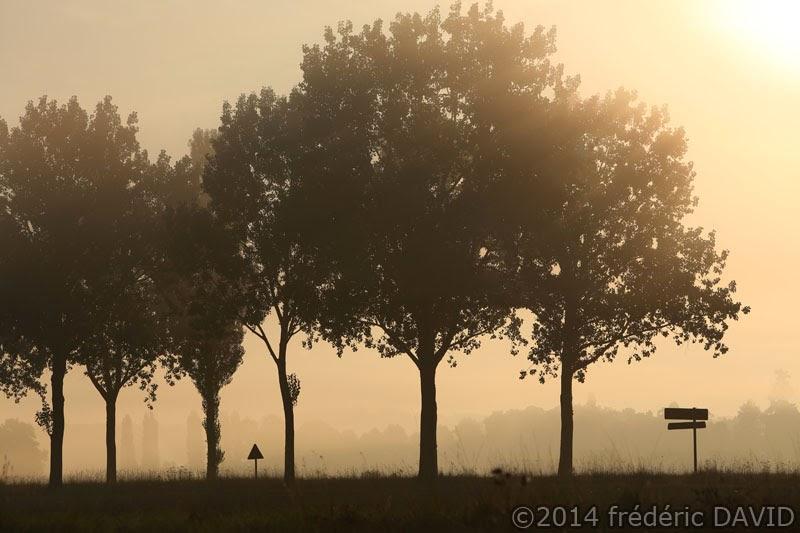 arbres silhouettes route contre-jour matin brume Seine-et-Marne