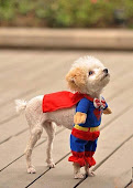 Perro-superman :)