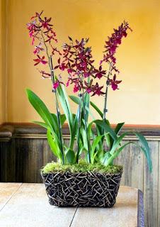 jenis tanaman hias di dalam ruangan