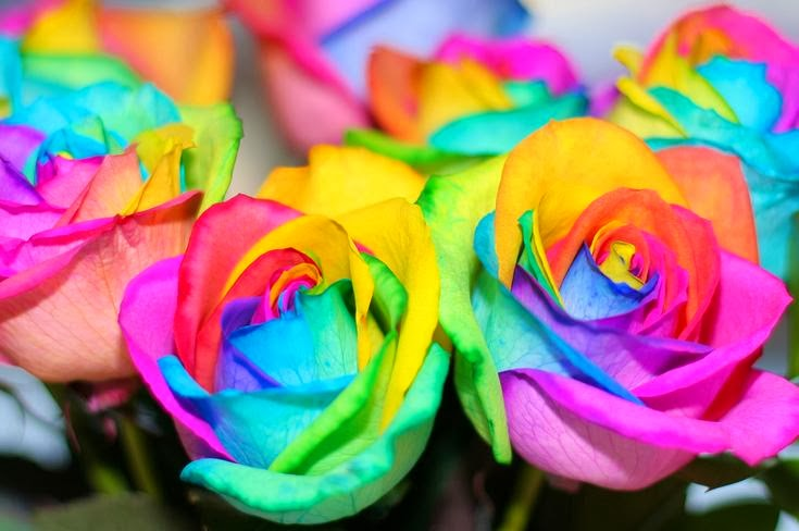 Flower homes rainbow roses for Where to find rainbow roses