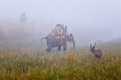Tourist Enjoying Elephant Safari