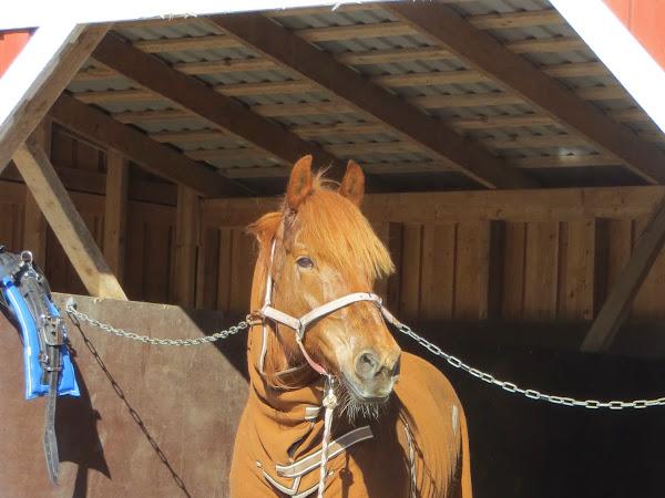 Hevonen on pro