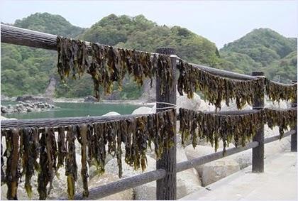สาหร่ายวากาเมะ (Wakame Seaweed)