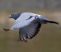 bolt burung termahal di dunia
