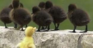 Ducklins - Motivational Blog