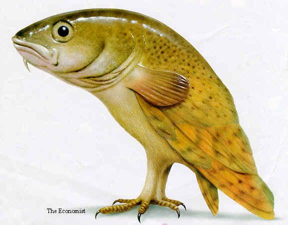 fishbird.jpg