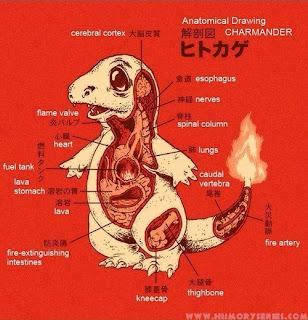 Anatomía Charmander