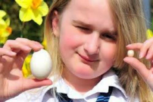 Budak Jumpa Telur Ayam Lebih Kecil Dari Duit Syiling