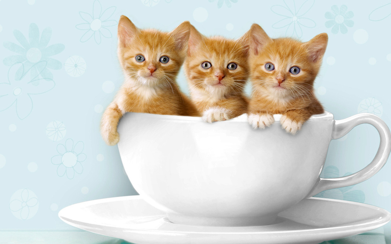 how long can kittens go without food