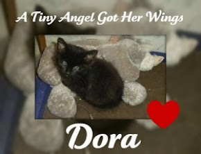 Dora - an angel too soon