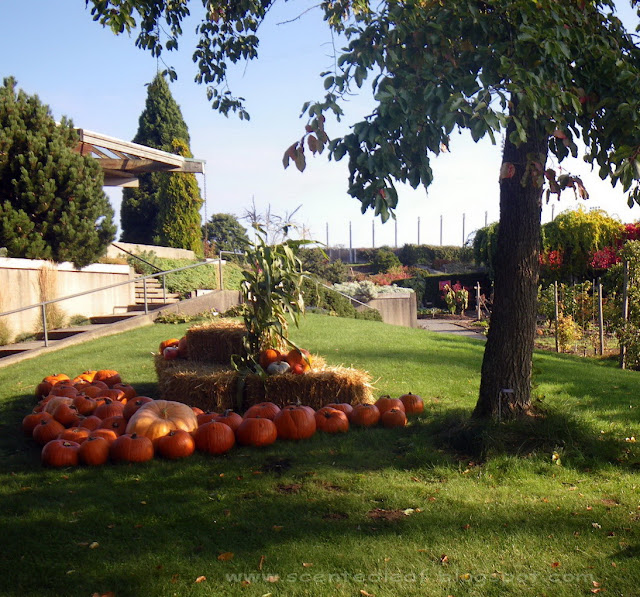 Pumpkins Patch at UBC Botanical Garden