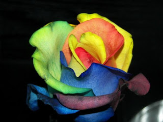 rainbow+rose+7 A Gift of Survival........