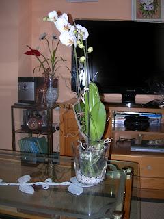 La orquídea, ya instalada
