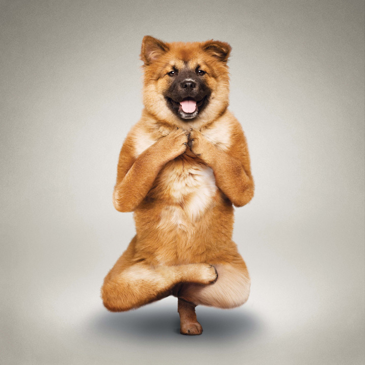 Funny Dogs Yoga Calendar ~ PModels