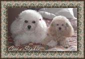 Céci e Sophie