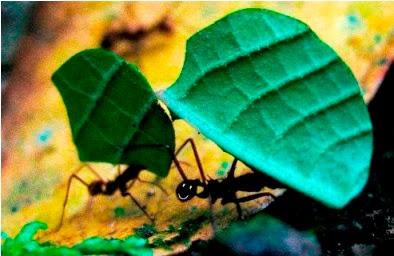 La Buena Actitud de la Hormiga. Buenos días, feliz día como la hormiga. poema de la hormiga.