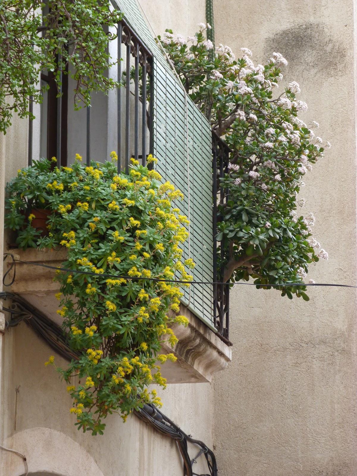 Tarragona in balcones for Balcones con plantas