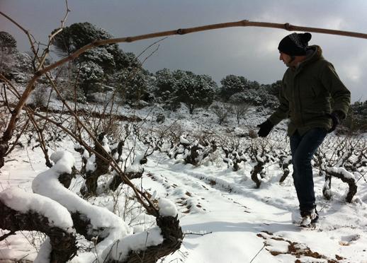 Viñedo nevado - Magna Vides