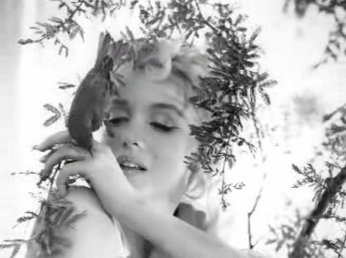 Marilyn Monroe Dog Name