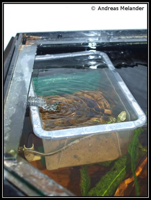 Melanders aquarium d i y simple fry rearing box for Fish breeding net