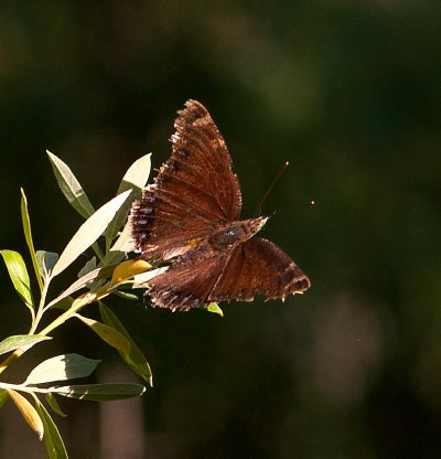 Elk lake news life at a montana mountain lodge a hot - Brown butterfly meaning money ...