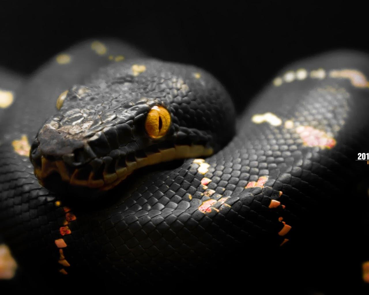 World Best Dangerous Snake HD Wallpapers HD Wallpapers Blog