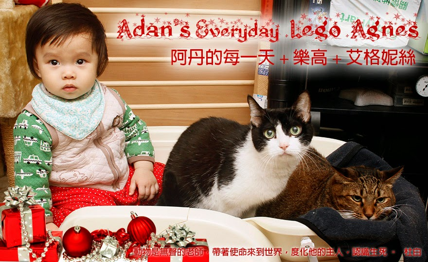 Adan's Everyday