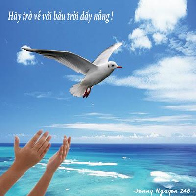 Bồ câu trắng bay về phía bầu trời
