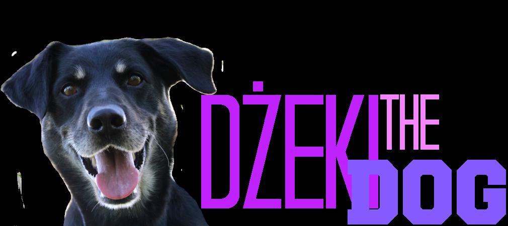 Dżeki the dog