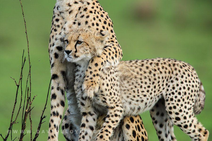 16. Mother Love by David Lloyd